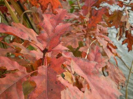 FOTKA - podzimní stromek