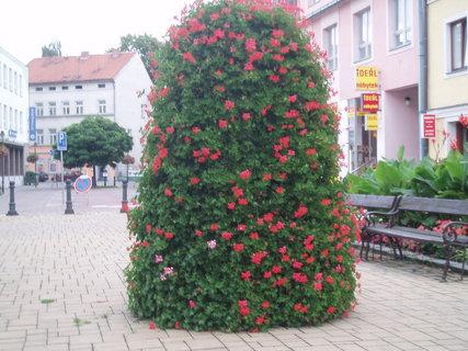 FOTKA - květinový kužel