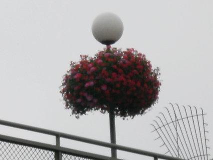 FOTKA - květinová lampa