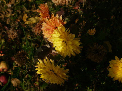 FOTKA - listopad na zahradě