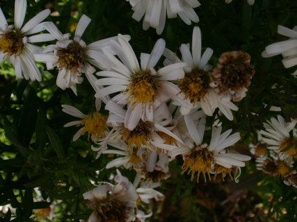 FOTKA - listopad na zahradě-