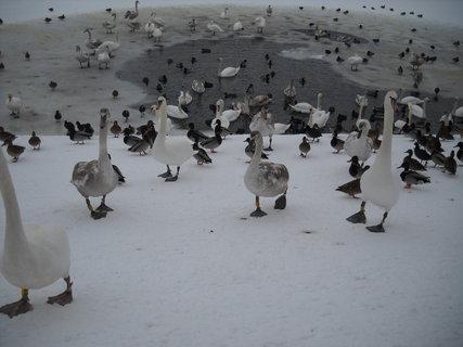 FOTKA - Zima v Hradci Králové