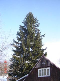 FOTKA - zima,sníh4