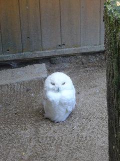 FOTKA - Sovice sněžní