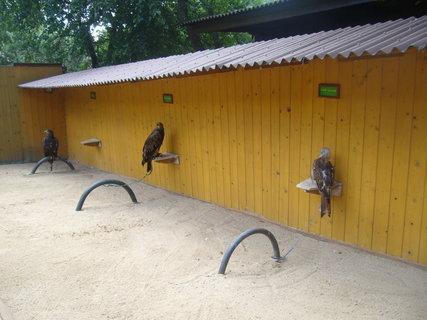 FOTKA - Zoo...........