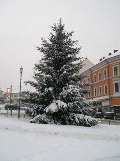 FOTKA - Vánoční strom na náměstí, jako by tam vyrostl