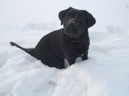 FOTKA - Dorinka ve sněhu