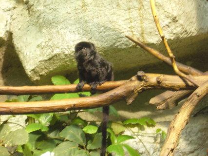 FOTKA - Opička.