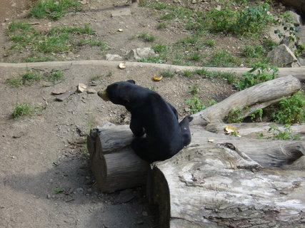 FOTKA - Medvěd malajský