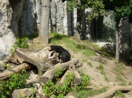 FOTKA - Medvěd malajský.