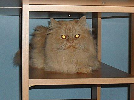 FOTKA - Garfielde, to není pelíšek, to je stůl!