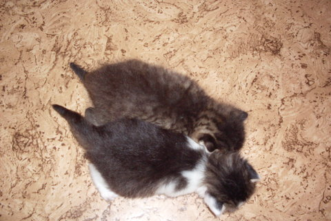 FOTKA - koťátka nová 62