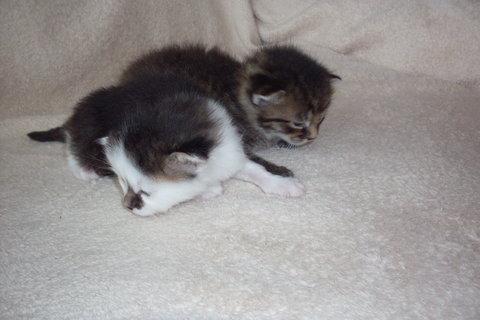 FOTKA - koťátka nová 63