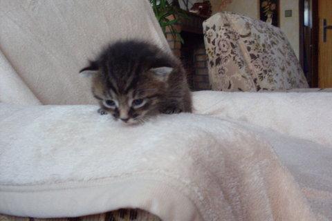 FOTKA - koťátka nová 66