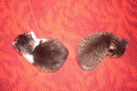FOTKA - koťátka nová 67