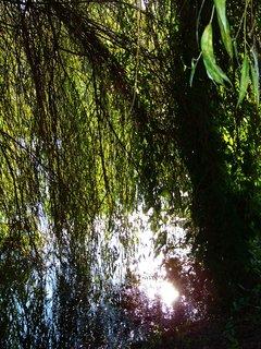 FOTKA - vzpomínky na léto, slunce se koupe