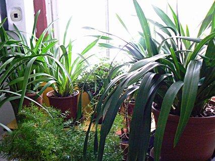 FOTKA - kousek ze zimní zahrady,moje místo relaxu v zimě