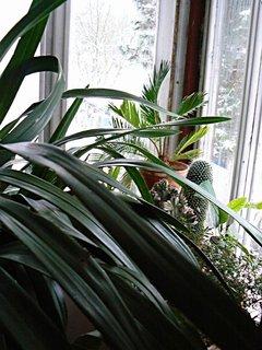 FOTKA - ještě kousek zimní zahrady,nebo spíš zahrádky