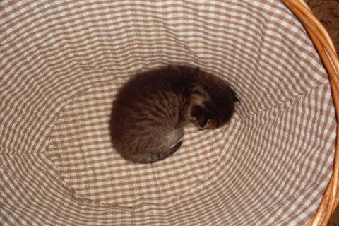 FOTKA - koťátka nová 69