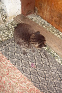 FOTKA - koťátka nová 71