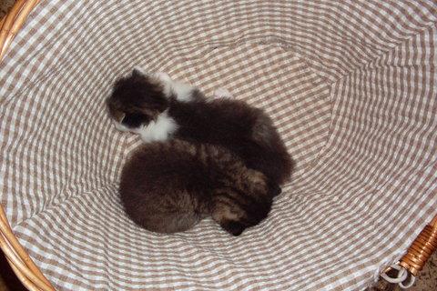 FOTKA - koťátka nová 74