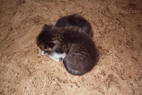 FOTKA - koťátka nová 75