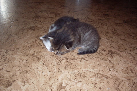 FOTKA - koťátka nová 77