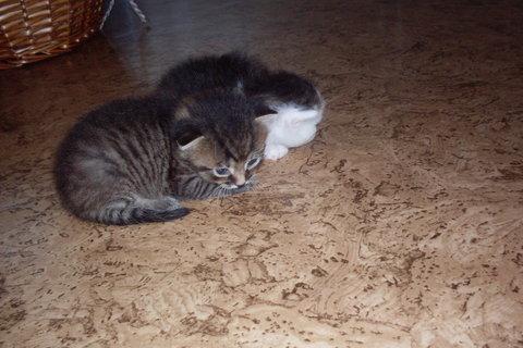 FOTKA - koťátka nová 79