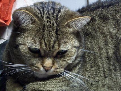 FOTKA - Kočička 12