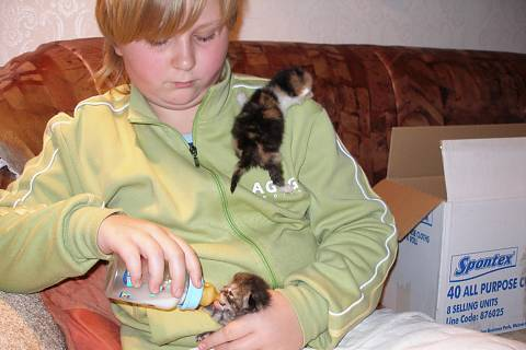 FOTKA - kočičí máma