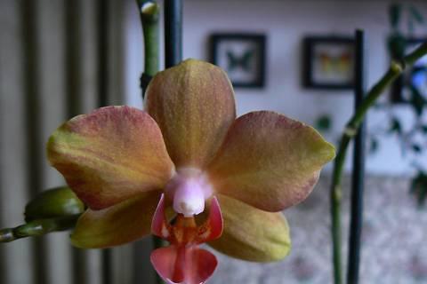 FOTKA - orchidej 9