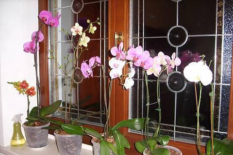 FOTKA - orchideje 2
