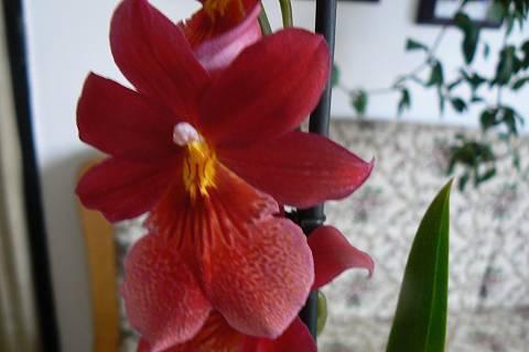FOTKA - detail květu orchidejky