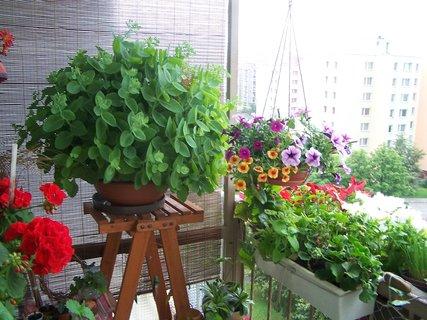 FOTKA - Léto na balkoně