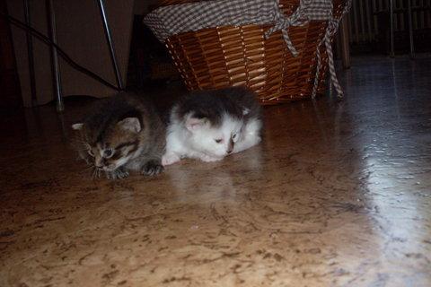 FOTKA - koťátka nová 82