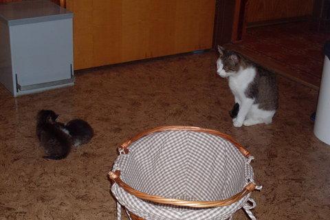 FOTKA - koťátka nová 83