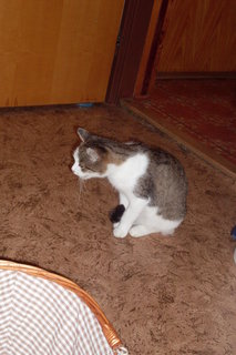 FOTKA - Minda hlídá koťata
