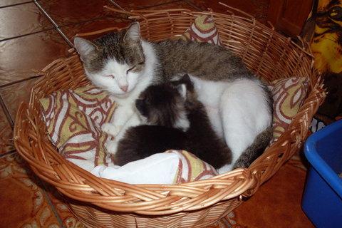 FOTKA - koťátka nová 88