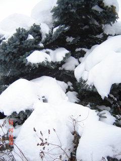 FOTKA - zima,sníh....