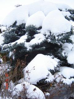FOTKA - zima,sníh.....
