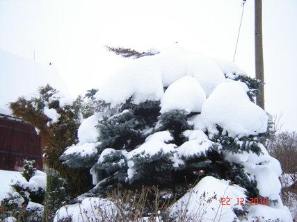 FOTKA - zima,sníh......