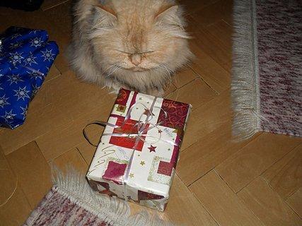 FOTKA - Jenom, aby tam nebyla myš!!!