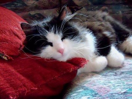 FOTKA - Spát v pelíšku, no to určitě, na gauči je nejlíp