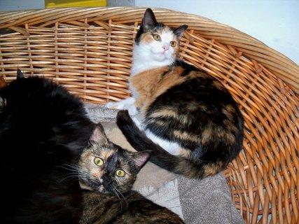 FOTKA - Tyhle koťátka jsem vykrmila z injekční stříkačky, dnes jsou v nové rodině maximálně spokojené