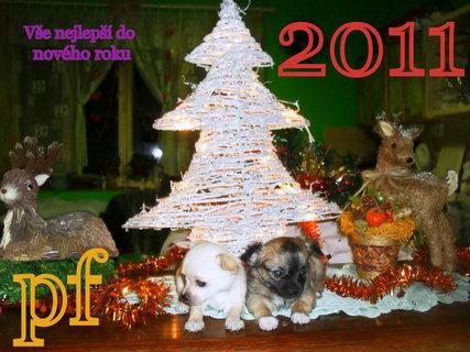 FOTKA - Naše psí mimča