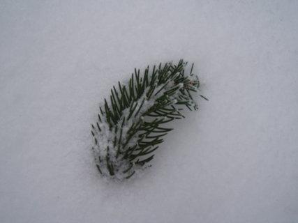 FOTKA - větvička ve sněhu