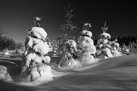 FOTKA - Krušnohorská zima bw
