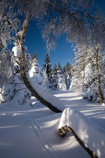 FOTKA - Pohled do zimního lesa