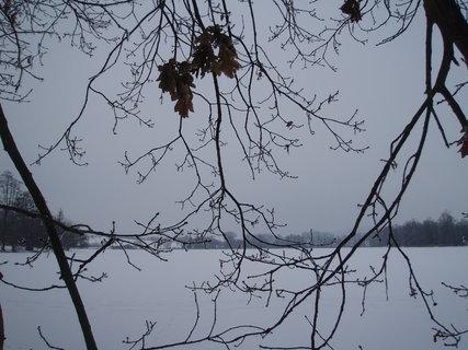 FOTKA - pod dubem na hrázi rybníka