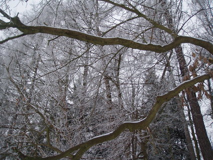 FOTKA - pod dubem 4